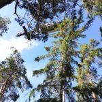 FFFW 2020.06.19 Nach dem Waldbrand 05