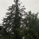 FFFW 2020.08.13 Hochwasser Judendorf-011
